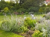 Low level herbaceous border