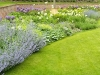 Large herbaceous border featuring varieties including Aliums and Nepeta
