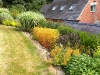 headbourne-worthy-mixed-shrub-planting