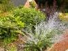 headbourne-worthy-perovskia-blue-spire