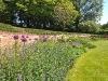 little-armsworth-alliums-nepeta-geraniums