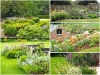 low-res-planting-collage-1