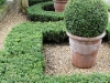 Buxus balls rise from within these tightly clipped buxus shapes,