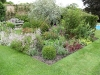 Traditional English planted border, combining structural shrubs with herbaceous perennials