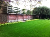 Pleached Hornbeam trees - Formal garden lawn