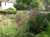 Planted herbaceous border with lots of flower interest to attact various insects