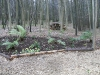 Log stack in woodland area, creating an Eco-pile which will be home to various forms of insects and small animals