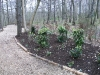 Planted border in woodland location, adding flowers and berries to encourage various forms of wildlife