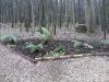 Woodland border planting