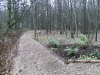 Border planting alongside woodland path