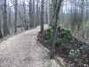 Border planting alongside woodland path