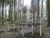 Specimen tree planting